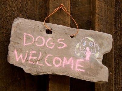 chicagou002639s best dog friendly restaurants apartmentguide dog friendly 402x299