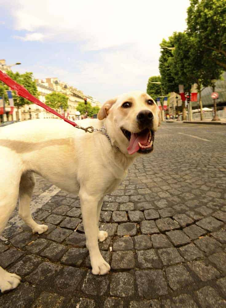 How To Walk A Dog In Your Apartment Community - Find a Dog Friendly Apartment