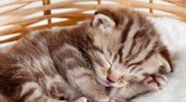 kitten 260p
