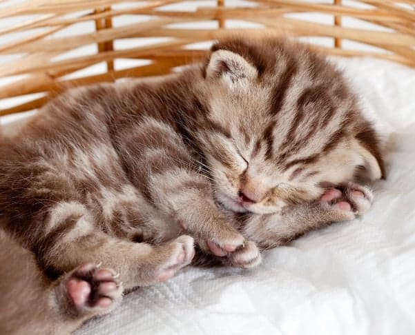 Your new kitten will be safe and warm in your apartment if you make the right preparations before bringing him home.