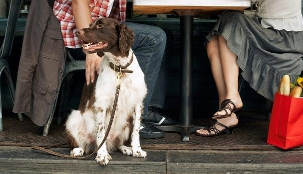 Many restaurants in Boston open their doors to furry friends.