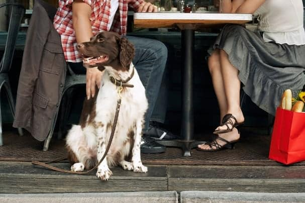 pet-friendly restaurants in boston
