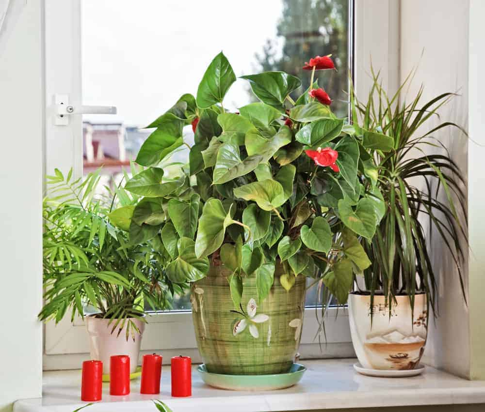 Five easy flowers to grow in small spaces - Large house plants low light ...