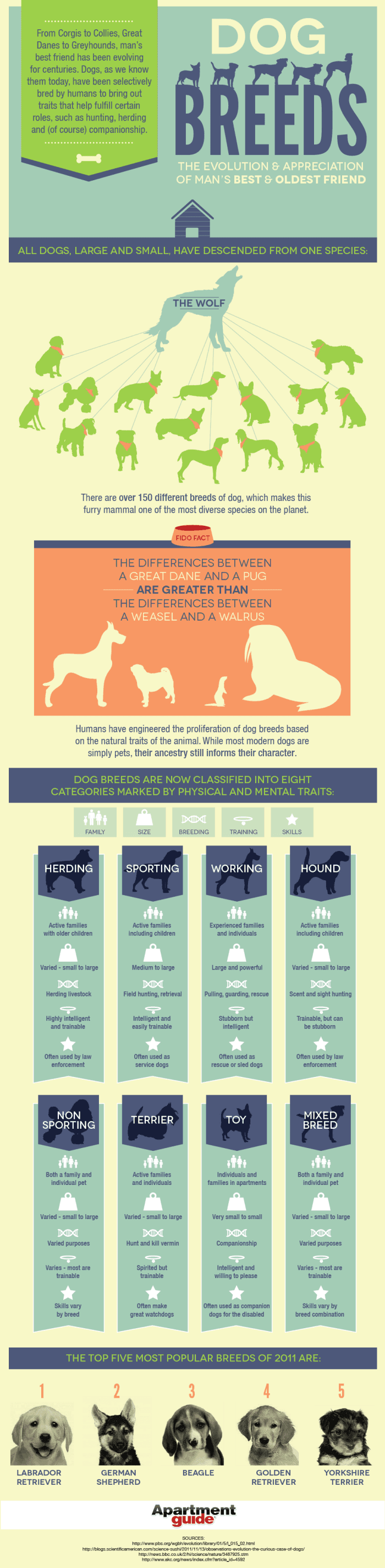 Top Dog Breeds