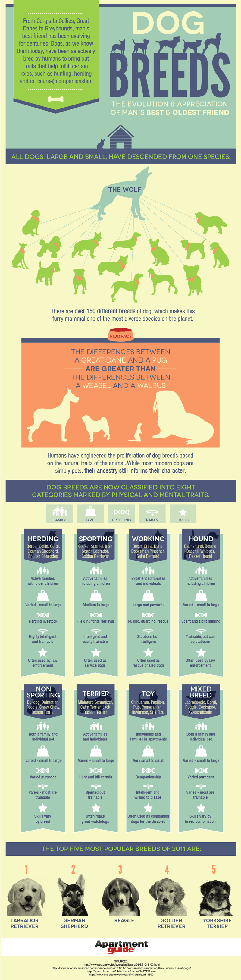 Dog-friendly apartment breeds