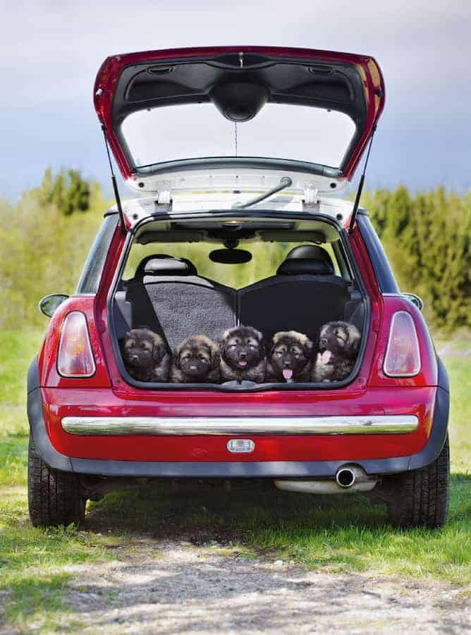 How To Keep Parked Car Cool For Dog