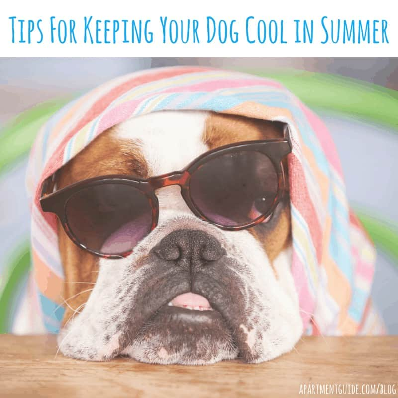 Tips For Keeping Your Dog Cool This Summer