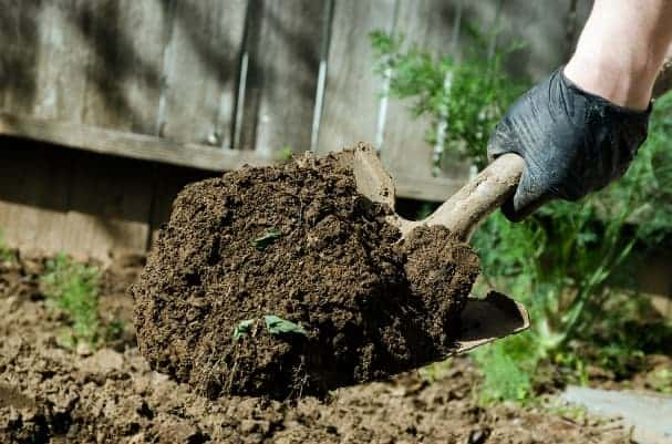 gardening exercises