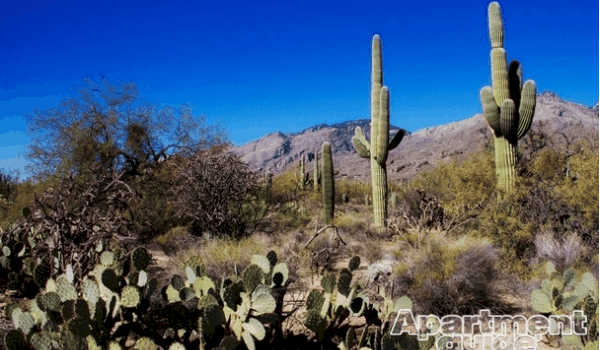 cacti-watermarked