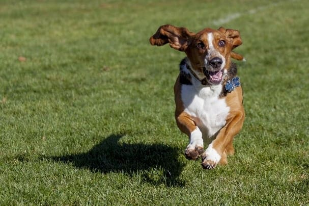 Off-leash dog parks are great places to let your pooch run free while you get to know some fellow dog lovers.