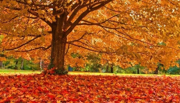 Great Cities For Fall Leaf Watching Apartmentguide Com