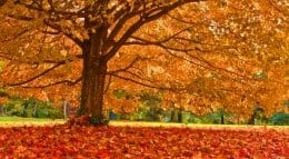 cities for fall leaf watching