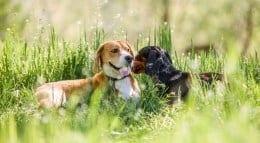 pet-friendly in lafayette