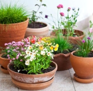 Here's the dirt on preparing your garden for spring planting.