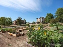OR-Wilsonville-Domaine at Villebois-outdoor gardenthumbnail