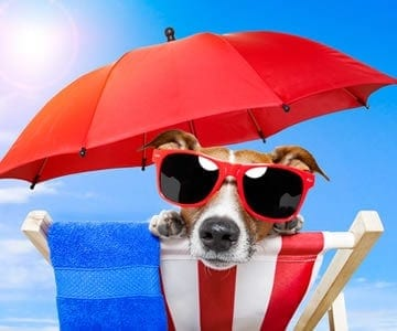 Here's a few warm-weather safety precautions to keep your pet safe in the summer!