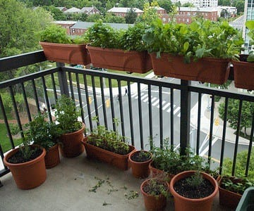 If your balcony s enough sun you can grow all sorts of ve ables in containers