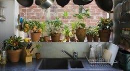 houseplants in kitchen 260p