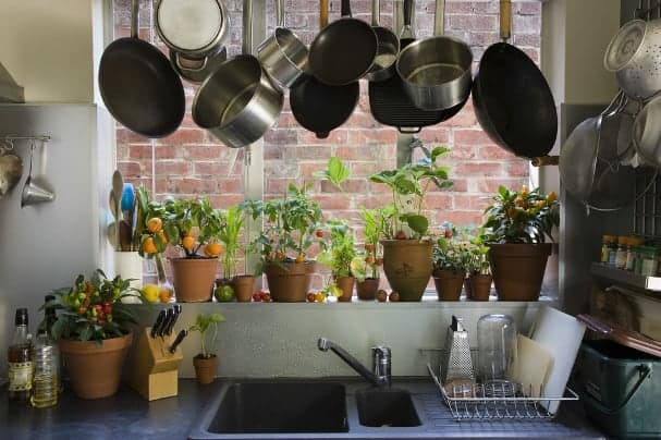 Clean Your Apartment S Stale Air With Houseplants