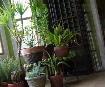 Houseplants don't just look nice -- they also improve your health by filtering your indoor air.
