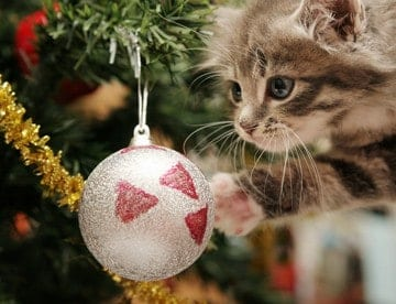Top Holiday Pet Hazards Kitten