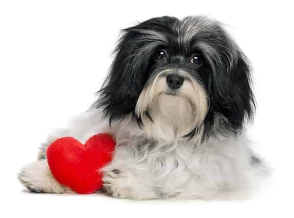 My Furry Valentine: Valentine's Day Gifts for Your Pet