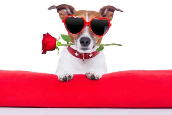 Your puppy Lothario only has eyes for you! Check out a few gifts to shower on your furry Valentine.