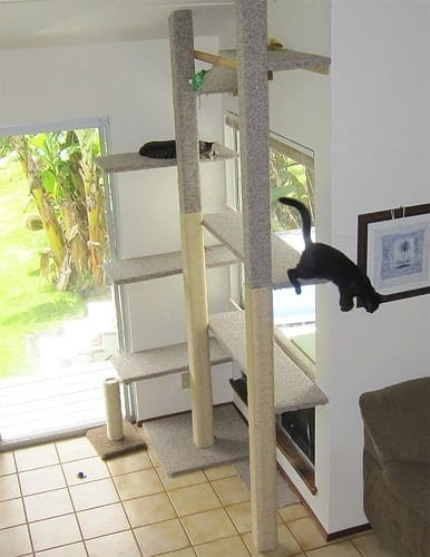 Catify Your Crib