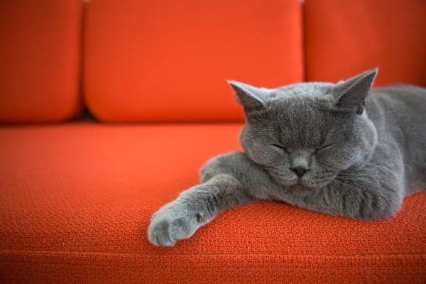 What a Cat Can Teach About Apartment Living