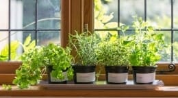 plants on windowsill 260p