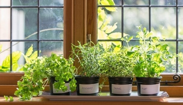 Nothing Brightens Up Your Apartment Like A Few Houseplants Not Only For Pretty Décor But Cleaning Indoor Air As Well