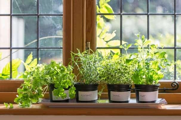 Make sure you put something under the pots to protect your windowsill.