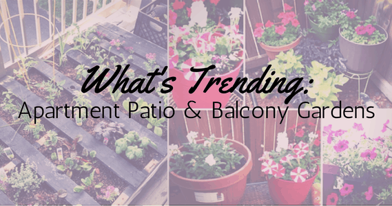 What's Trending: Apartment Patio & Balcony Gardens