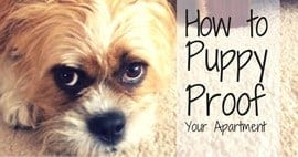 Real Life Lessons How To Puppy Proof Your Apartment
