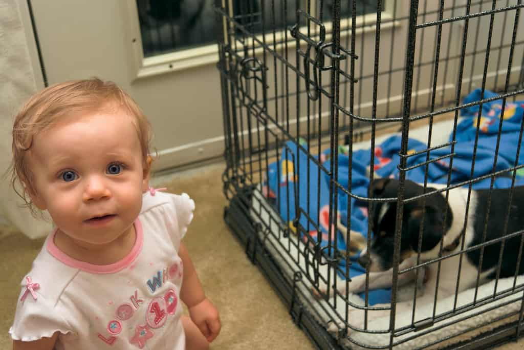 5 Ways to Baby-Proof and Puppy-Proof