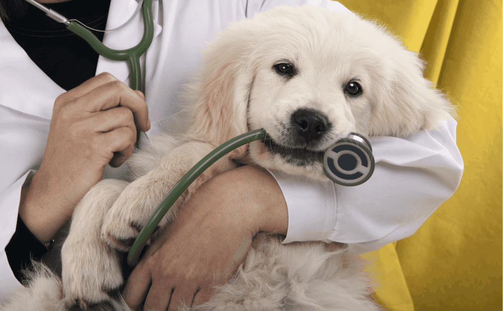 How to Find the Right Vet Clinic