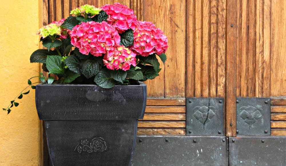 Best indoor plants for spring Indoor apartment plants