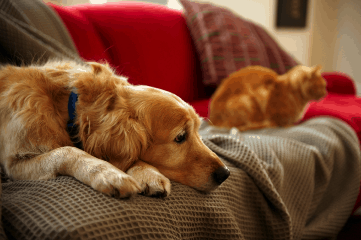 How to Introduce Pets When Moving In With Another Pet Owner