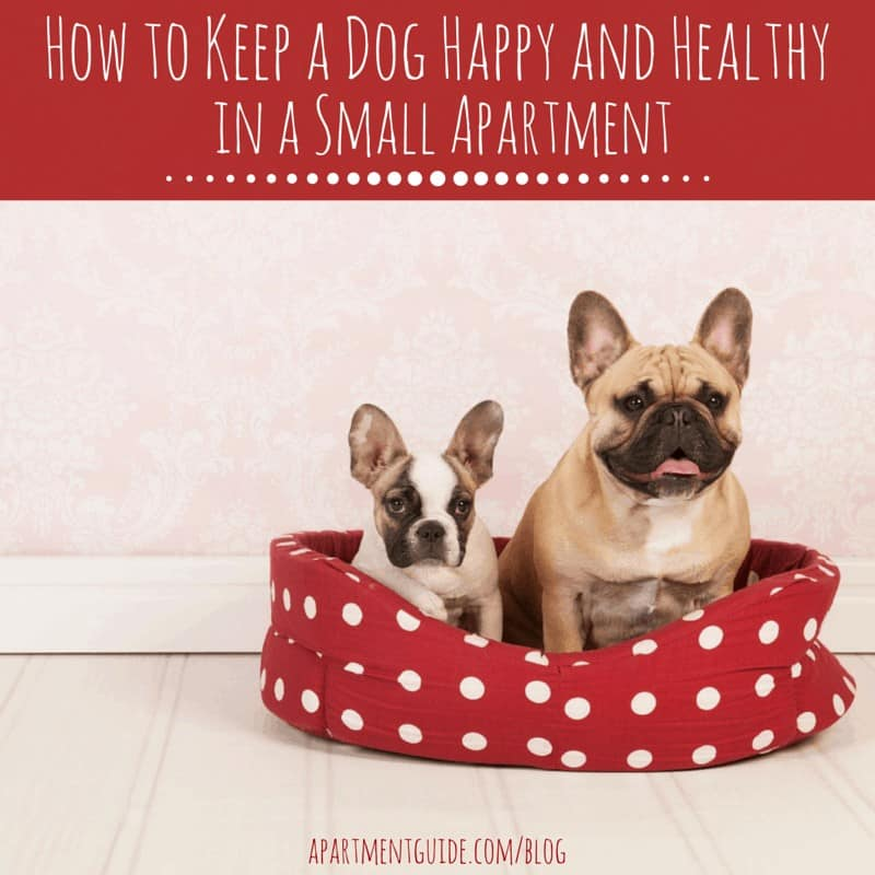 How to Keep a Dog Happy and Healthy in a Small Apartment