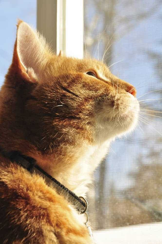 7 Things to Think About Before Adopting a Pet - What Does My Lease Say?