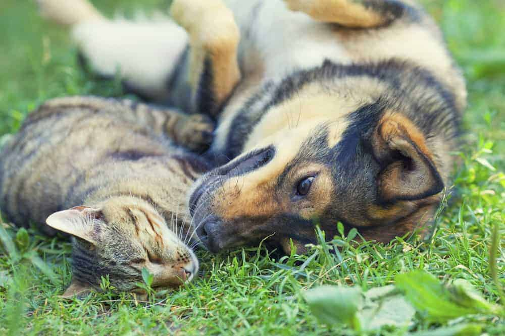 7 Things to Think About Before Adopting a Pet