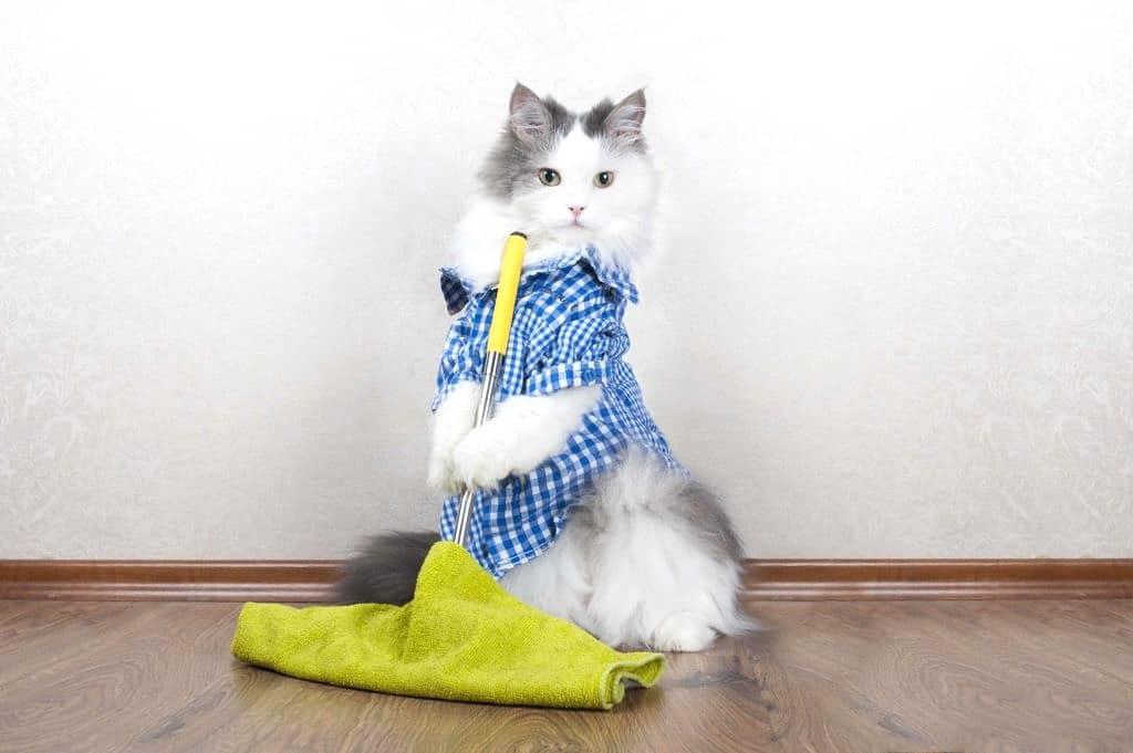 clean cat toys