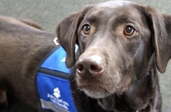 service animal dog with vest