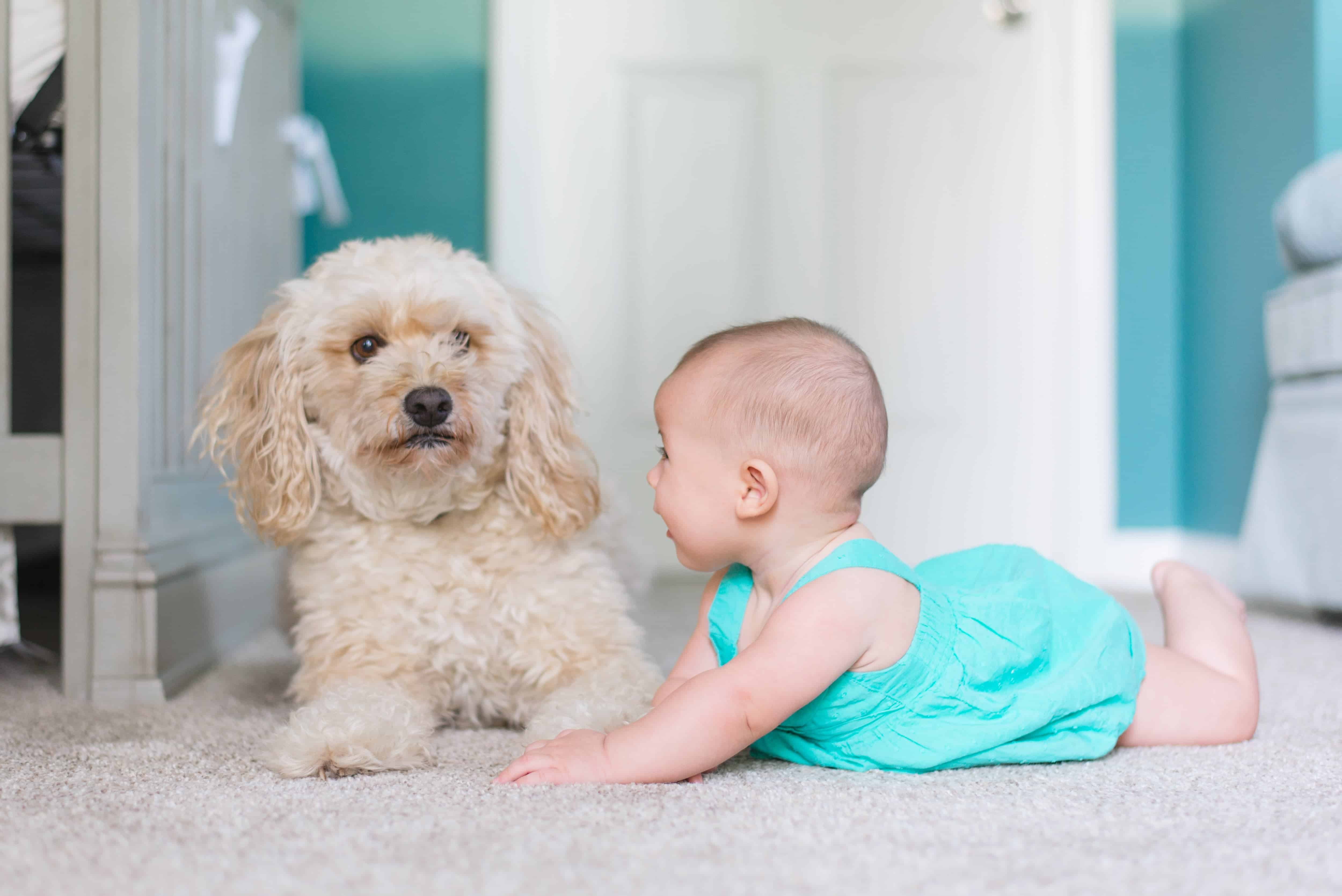 baby and dog on the floor