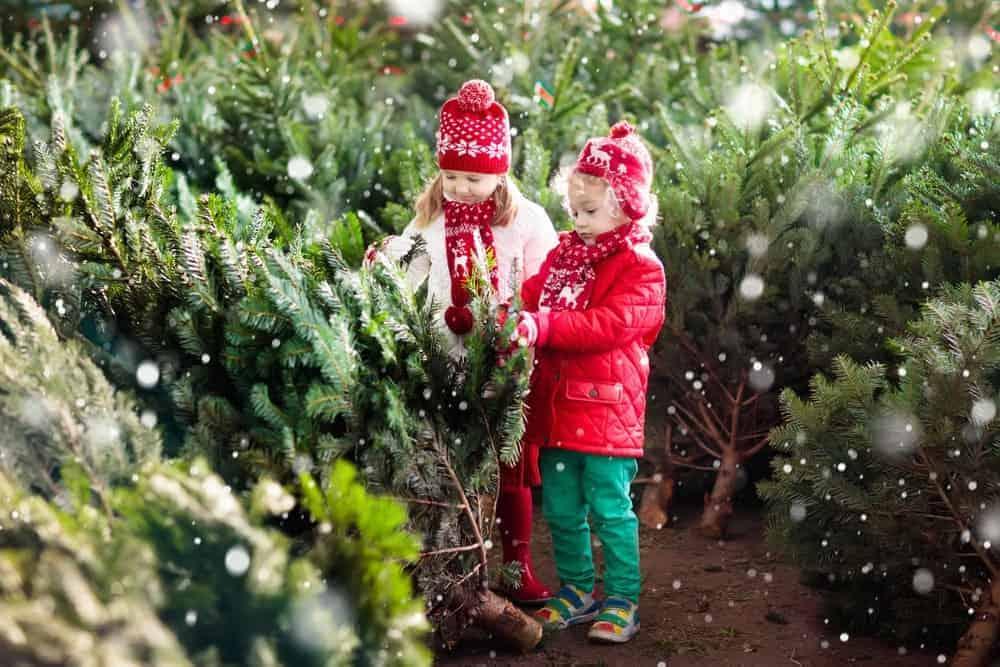 girls at christmas tree farm