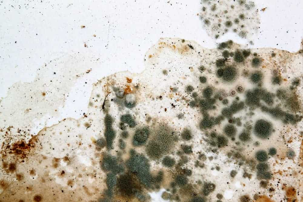 What to Do When You Find Mold in Your Apartment