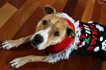 dog wearing ugly christmas sweater