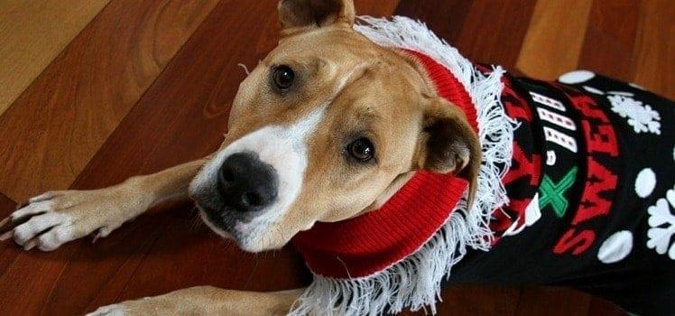 dog wearing ugly christmas sweater