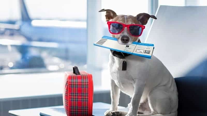 dog at airport