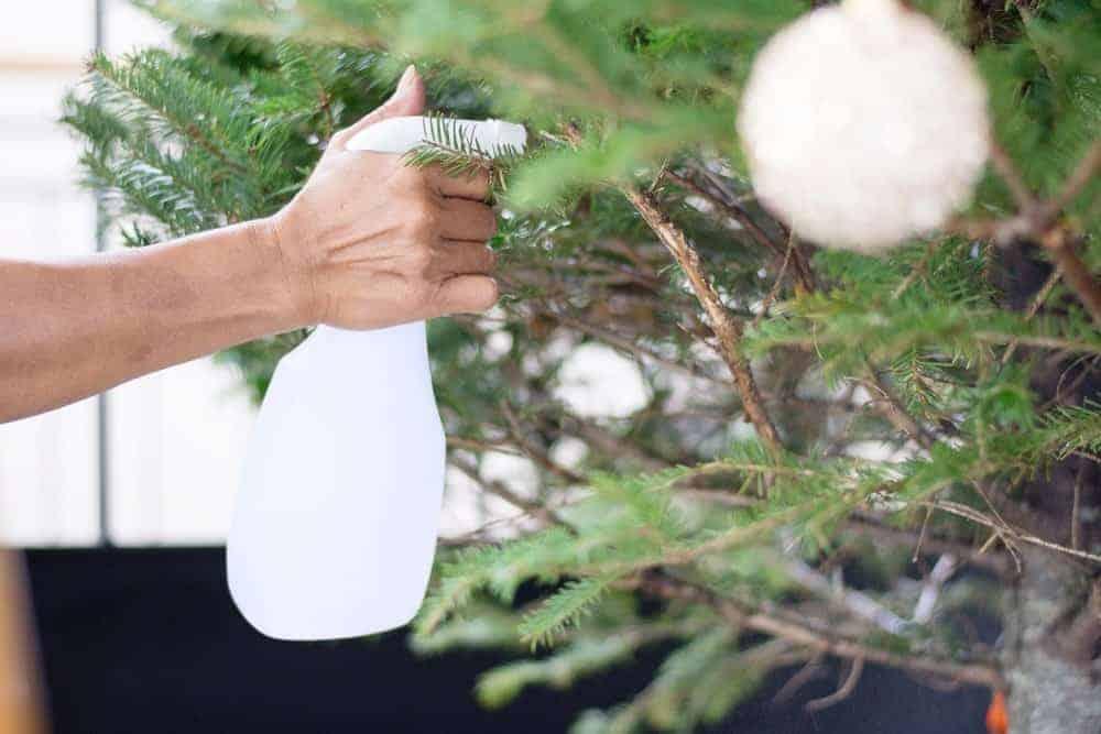watering christmas tree